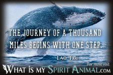 whale-quotes-whale-sayings-1200x800.jpg