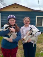 pam and me with lambs.jpg